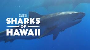 Sharks of Hawaii thumbnail