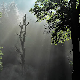 Ráno v lese by Jarka Hk - Nature Up Close Trees & Bushes ( tree, fog, mysterious, forest, sunrise )