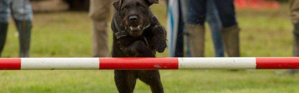 a black dog jumping at an agility event