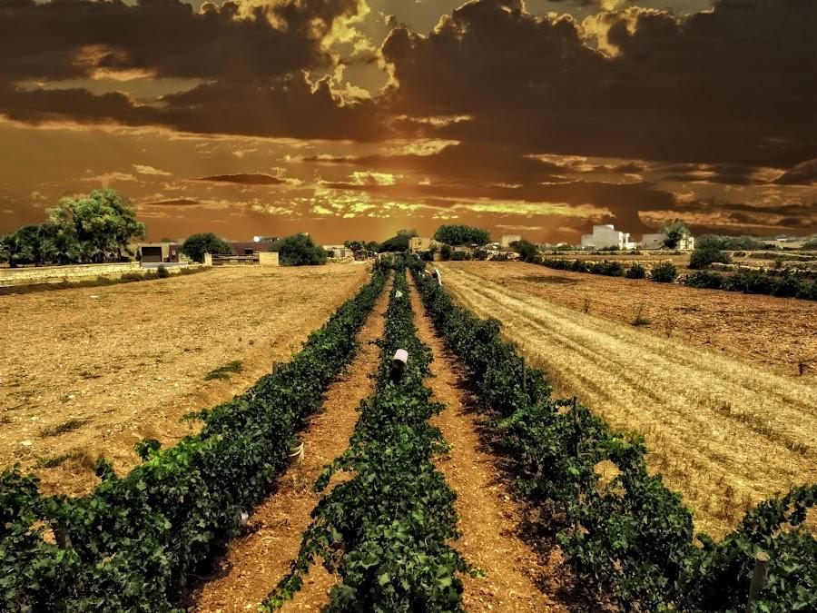 Raba by Lino Chetcuti - Landscapes Prairies, Meadows & Fields