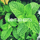 Health Benefits of Mint for PC-Windows 7,8,10 and Mac