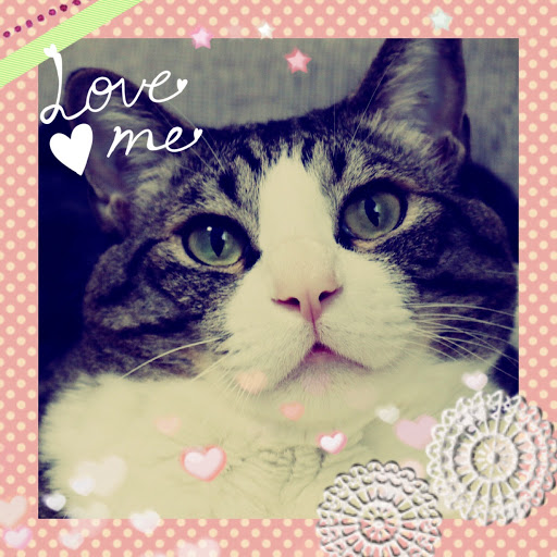 らむ🖤【CT愛猫部16番🐾】のプロフィール画像