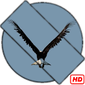 Eagle Video Wallpaper icon