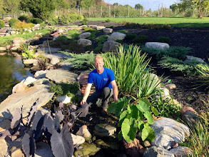 Photo: The power of wetland or bog filtration for fish ponds. Getting ready to prepare this pond for winter in Rochester NY with a little fall maintenance. The bog has kept the pond looking beautiful all year. www.acornponds.com