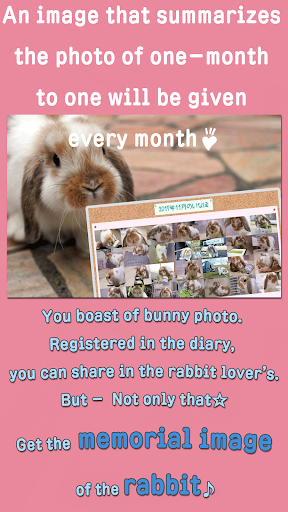 Rabbit Photos -- Bunny wallpaper, photo sharing... 3.00.0005 screenshots 5