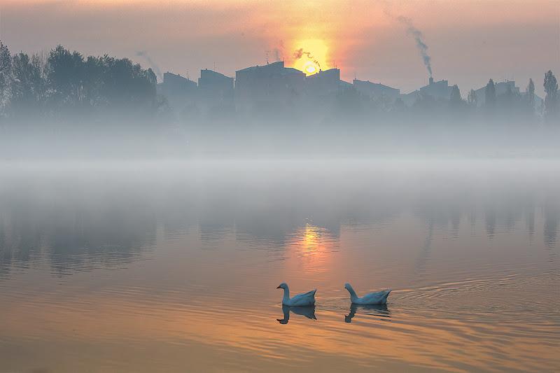 nebbia al mattino sul laghetto di angart71
