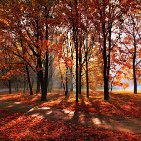 automn colors  by Alexandru Popovski - Landscapes Weather ( fall, color, colorful, nature )