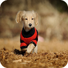 Smart Puppy Theme C Launcher icon