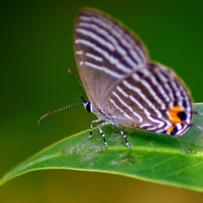 Butterfly by Twin Chan - Animals Insects & Spiders