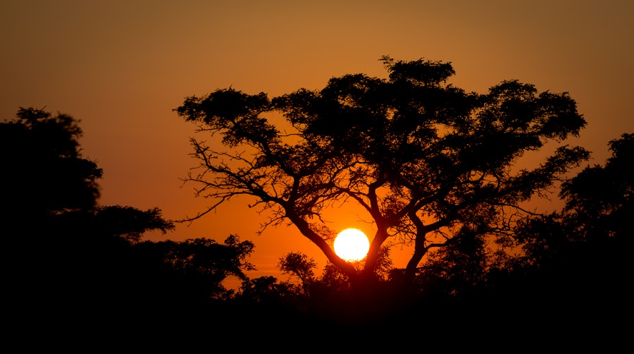 African sunrise by IDG Photography - Landscapes Sunsets & Sunrises ( sun set, african, sun rise, rise, sun, silhouette,  )