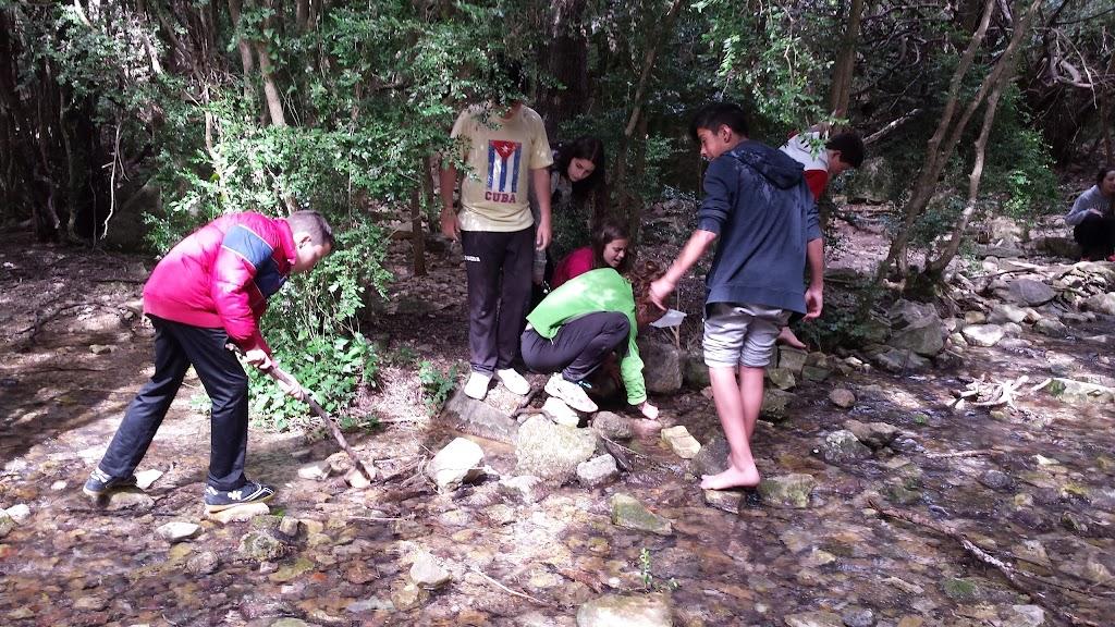 Buscant insectes de riu per analitzar la contaminació