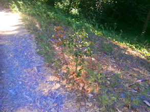 Photo: This seedling is too close to the path.