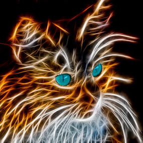 Pusi the cat by Benny Høynes - Digital Art Animals ( abstract, animals, cat, art, colours,  )