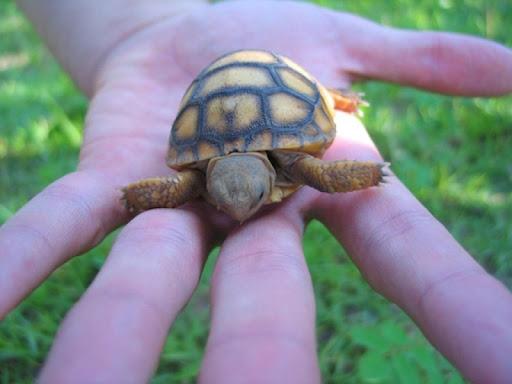 Cute turtles Wallpapers FREE