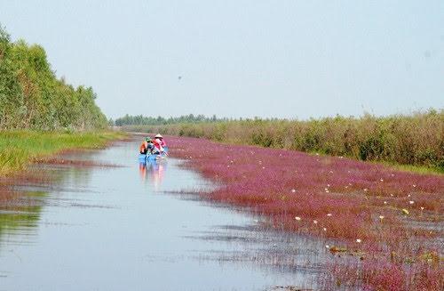 Vườn quốc gia Tràm Chim, nhĩ cán tím quyến rũ