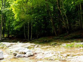 Photo: 渓畔林がきれいです