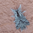 Large Tolype Moth