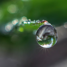 my dew.... by Kawan Santoso - Nature Up Close Natural Waterdrops