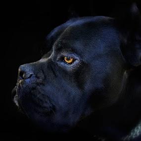 Dangerous by Jasna Petrovic-Zivkovic - Animals - Dogs Portraits