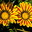 Flower Love by Joshua Meyer - Novices Only Flowers & Plants ( orange, yellow, flowers )