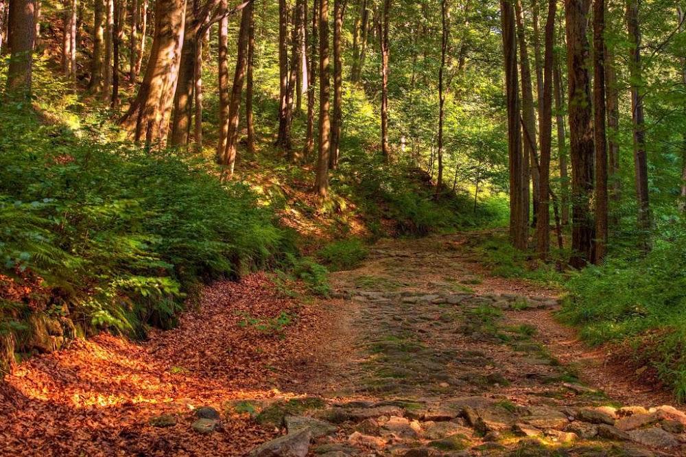 best-running-tracks-trails-pune_Hanuman_Tekdi_image