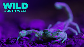 Wild South West thumbnail