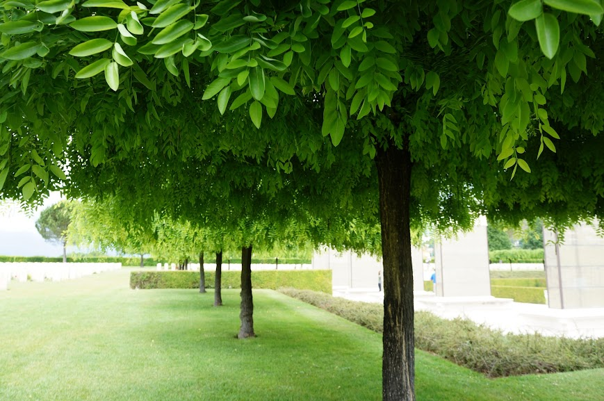 Beautiful trees in Monte Cassino Cemetery (2015)