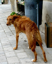 Photo: Doggy Castellterçol