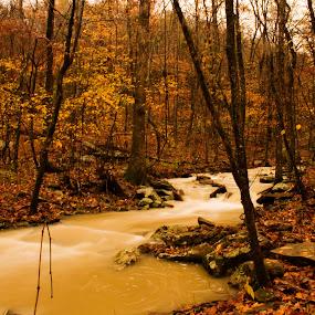 Creek at Flood by Jamie Newton - Landscapes Waterscapes ( orange, color, creek, brown, ozarks, arkansas )