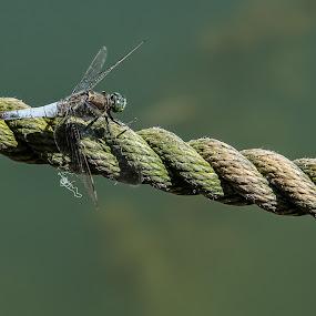dragonfly by Marjan Gresl - Uncategorized All Uncategorized