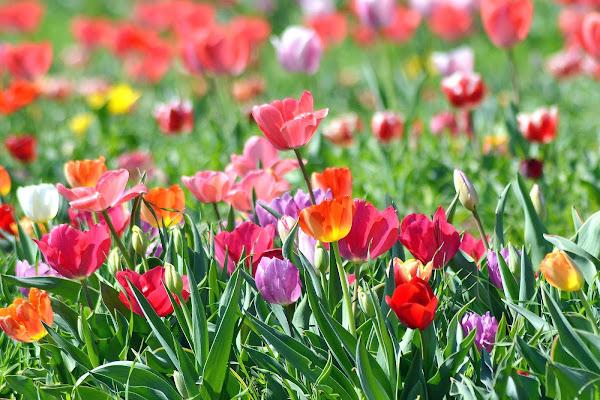 primavera a tutto colore