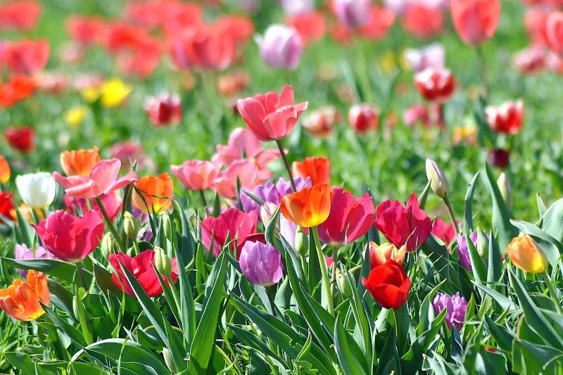 primavera a tutto colore di silvia_brutti