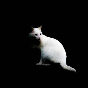 Cat by Jaguar Ricko - Animals - Cats Portraits ( photography )