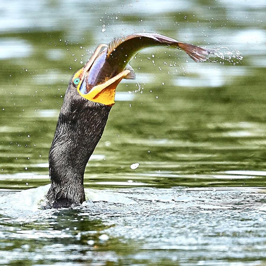 0 Bird 98837~Q by Raphael RaCcoon - Animals Birds