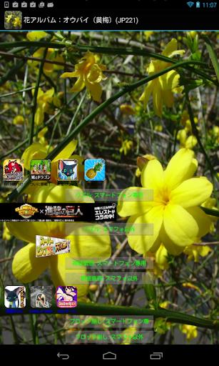 玩免費旅遊APP|下載花アルバム:オウバイ(黄梅)(JP221) app不用錢|硬是要APP