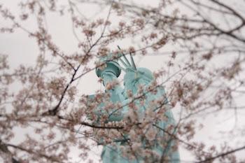 桜が咲く頃にはさようなら「ドナルド・トランプ時代のアメリカ人難民」
