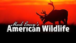 Mark Emery's American Wildlife thumbnail