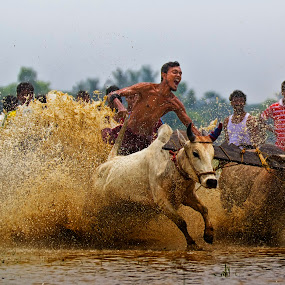bull race.. by  Bivahasutra Wedding Photography - Sports & Fitness Watersports ( bull race, west bengal, bengalculture, kolkata, india )