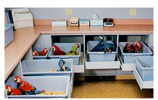 "This image shows what a typical hand-rearing nursery looks like. ""After the incubation of the eggs, the birds are hatched and the chicks placed in large nurseries for hand-rearing. In this nursery setting, the birds are housed alone or in groupings with other birds of the same species. These large nest-bins can be pulled out to allow them to socialize with the other chicks who share their bin and those in the bins next to them. When these nest-bins are rolled in, they provide a secure, dark nest cavity. However, this method of chick-rearing is not as preferable as leaving them with the parents; they are not receiving the attention and socialization that are necessary for development that they would normally receive from the parents"" (text and image courtesy Yvonne Van Zeeland in Speer: Current Therapy in Avian Medicine and Surgery). When placed in these bins and rolled in to darkness, the birds are entirely alone, which is terrifying for chicks. They need the parents and siblings to be secure."