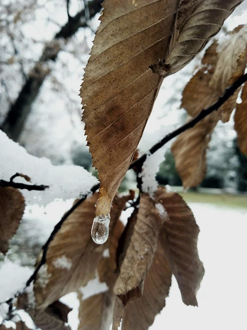 """""""perla d'inverno"""" di Anna99"""