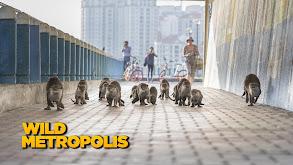Wild Metropolis thumbnail