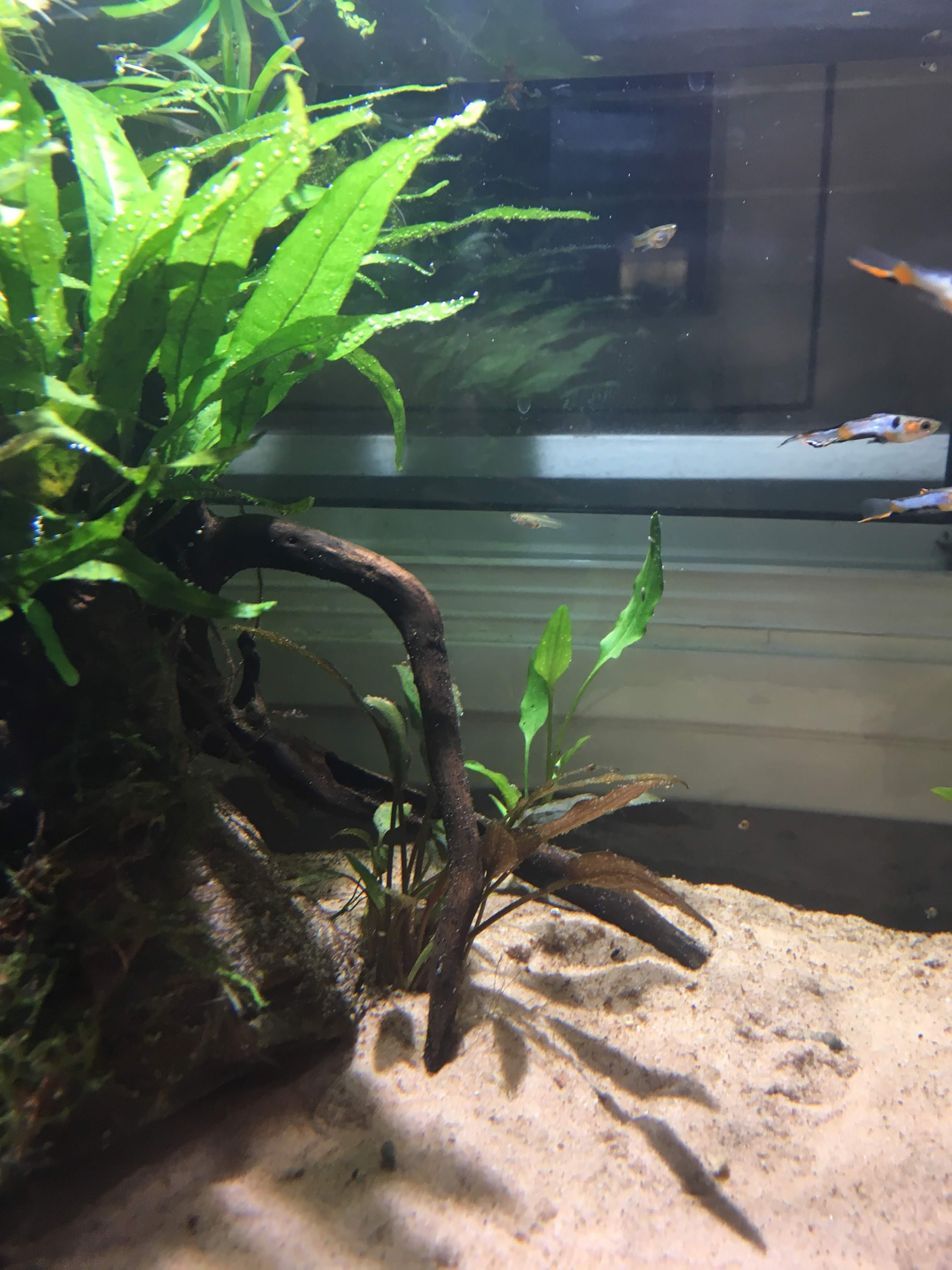 25g long low rimless more plants more ferts more fun page 3