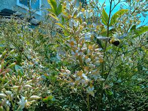 Photo: Bumble Bee Close Up