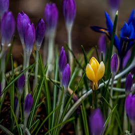 by P Murphy - Flowers Flower Gardens (  )