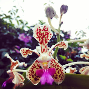 Orchid by Alnia Furwani Maulina - Instagram & Mobile Android (  )