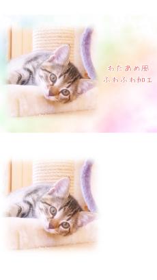 わたあめカメラ - わたあめ風ほわほわ写真加工アプリのおすすめ画像1