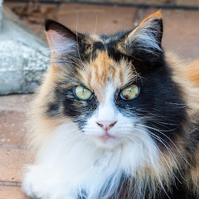 Colourful cat by Ada Louw - Animals - Cats Portraits