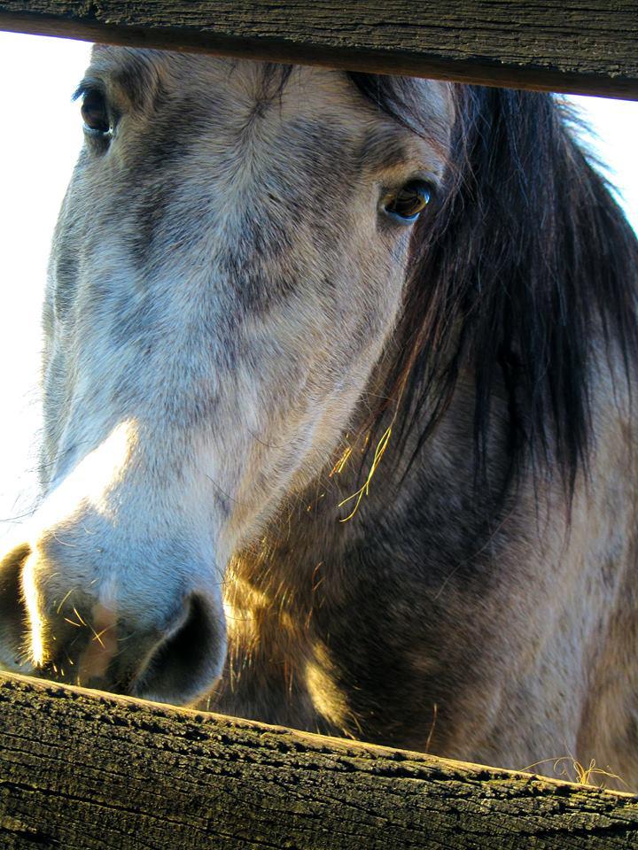 Cavalli di Antopaga