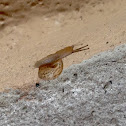 Unknown Spotting ( A Different Snail )