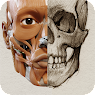 Install  3D Anatomy for the Artist